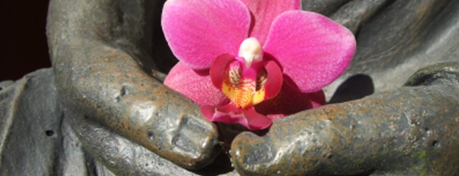 Wat-is-ZO1-Boeddhaschoot1