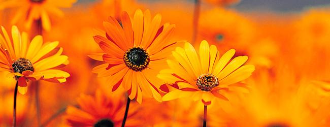 Wat-is-ZO2-Oranje-bloemen1