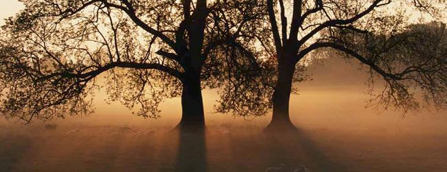 Wat-is-ZO4-Bomen-voor-zon1