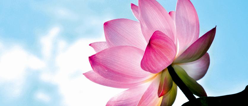 lotus viering van het zijn